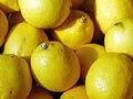 citroen bio