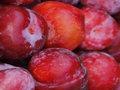 biologische rode pruimen