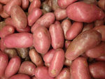 aardappel bio rood