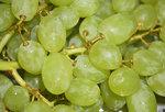 Witte druiven (Italië)